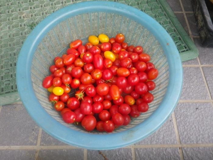 収穫2_20_08_23
