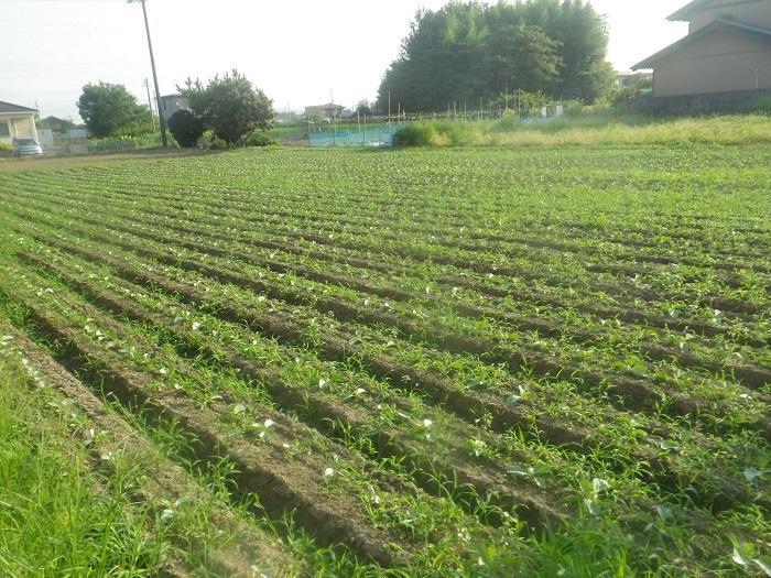 プロの畑1_20_08_26