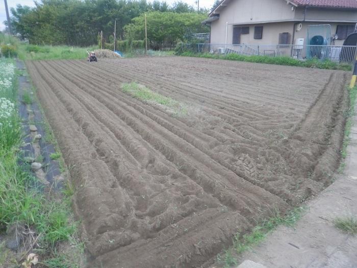 隣の畑1_20_08_27