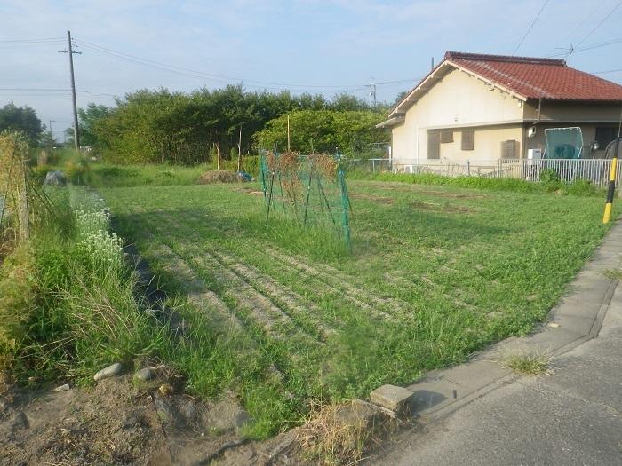 隣の畑20_08_26