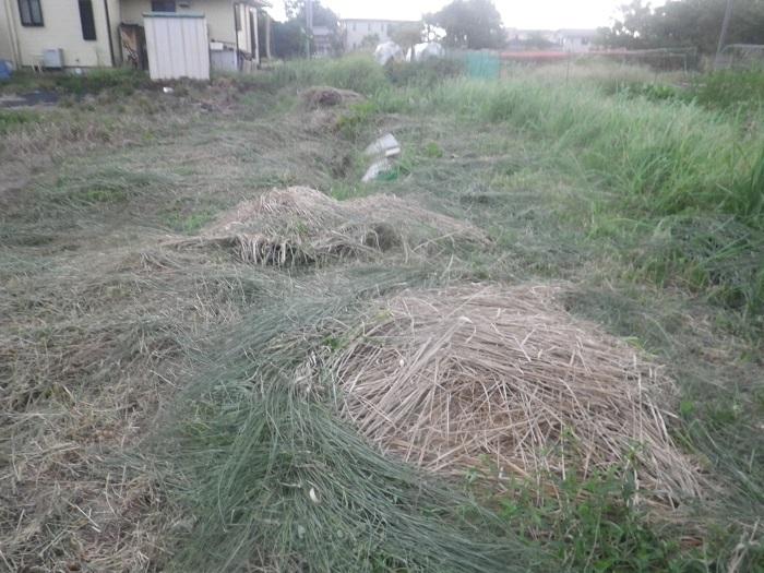 草刈り2_20_08_30