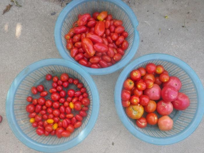 収穫2_20_08_30