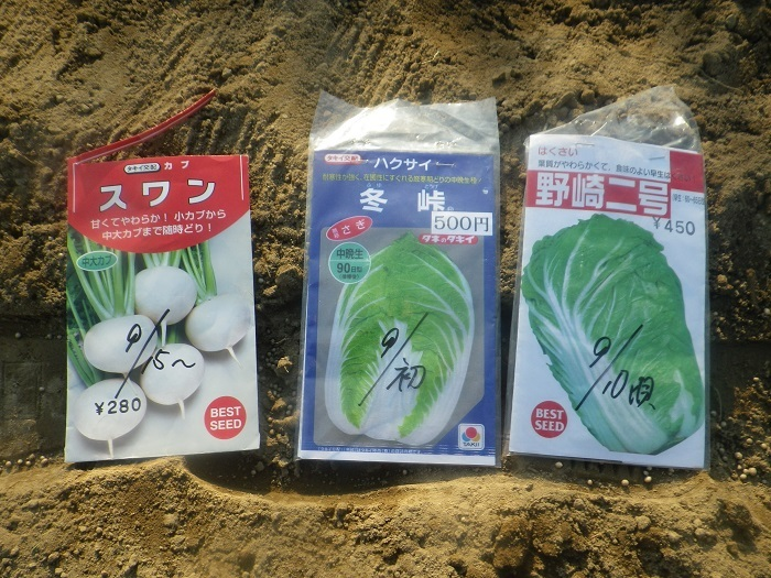 白菜4_20_09_05
