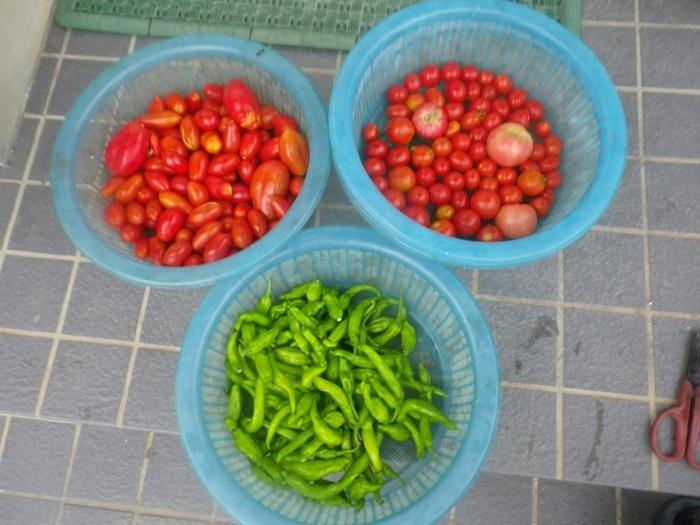 収穫1_20_09_06
