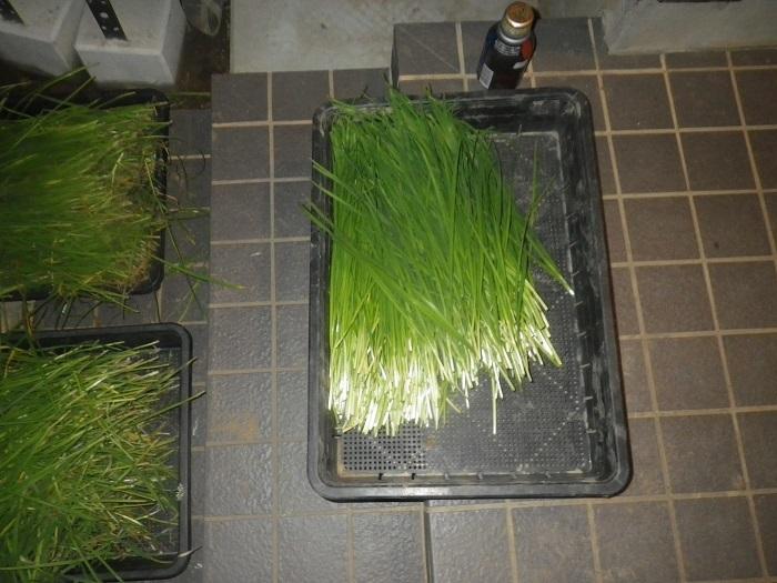 収穫3_20_09_13