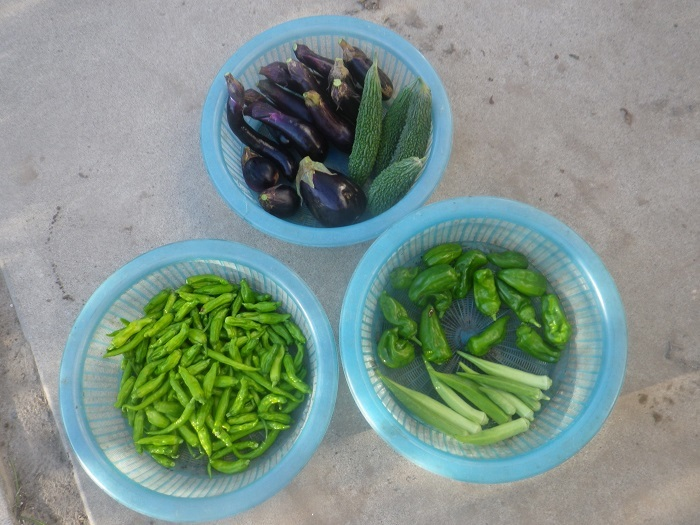 収穫20_09_15