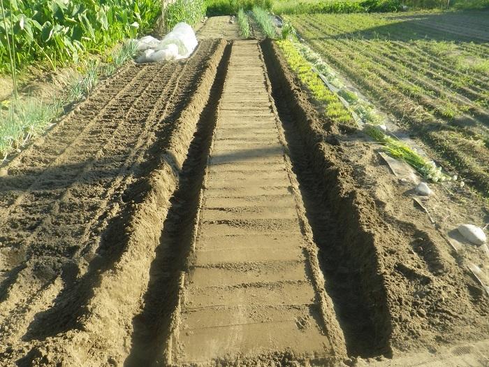 畝作り3_20_09_15