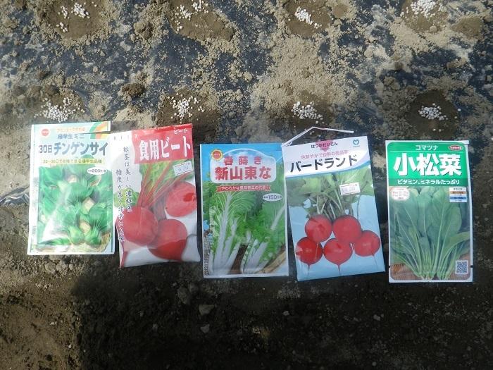 小物野菜2_20_09_19