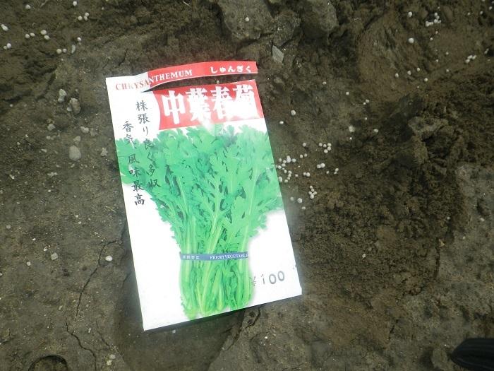 春菊3_20_09_19