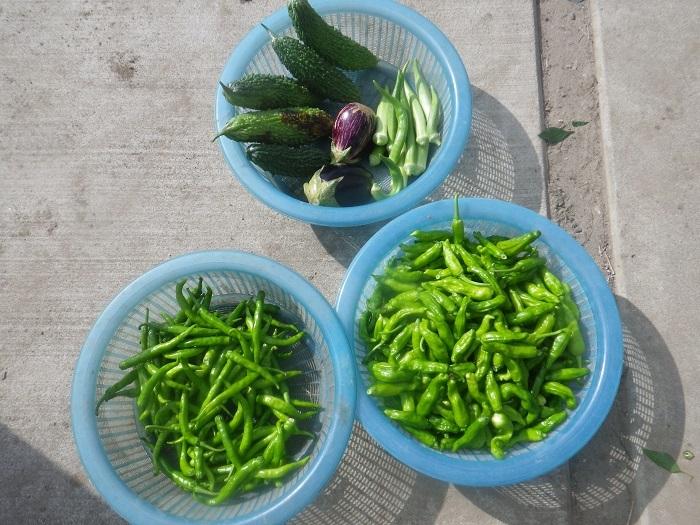 収穫20_09_22