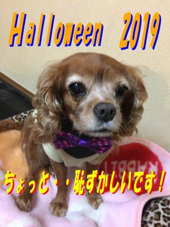 halloween2019セン