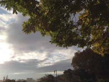 曇り空の朝191119