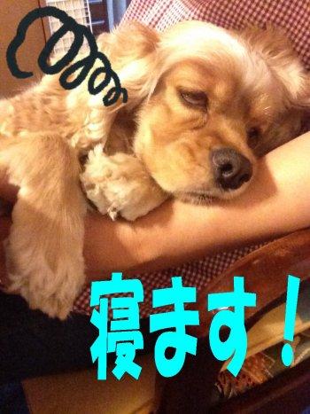 寝ますルルちゃん191120
