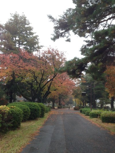 秋から冬へ191126