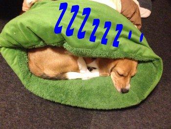 クウも寝ていて191127