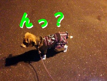 夜のお散歩クウ200131
