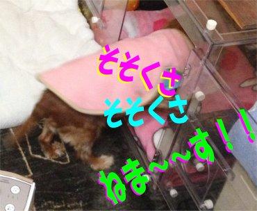 寝る寝るセン200205