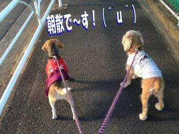 お散歩にクウルル200209