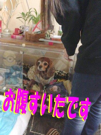 センちゃんご飯待ち200209