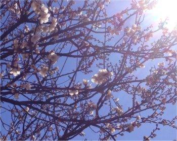 梅の花も200209