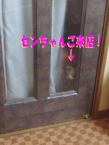 センちゃんご来店200216