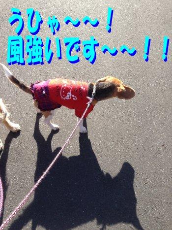 お散歩クウ200223