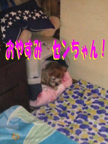 お休みセンちゃん200309