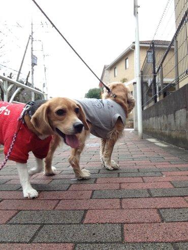 お散歩クウ200309