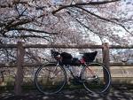 桜とロードバイク@かあさんのおむすびの店