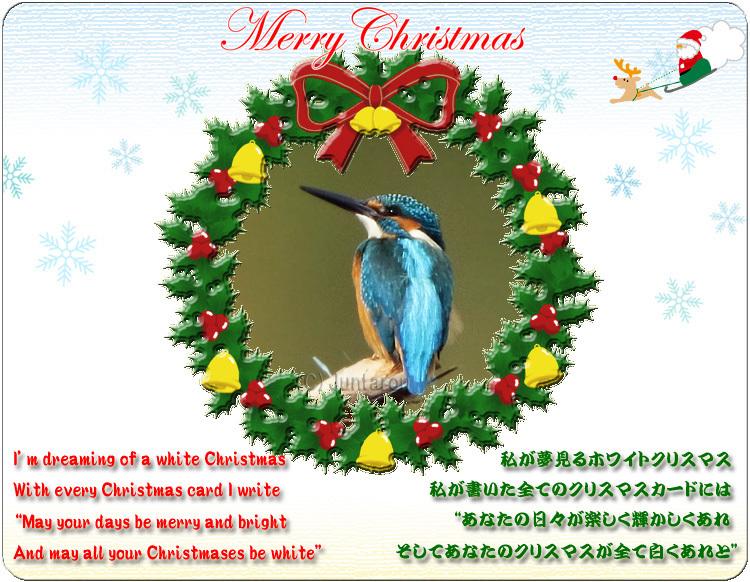 カワセミ クリスマスカード