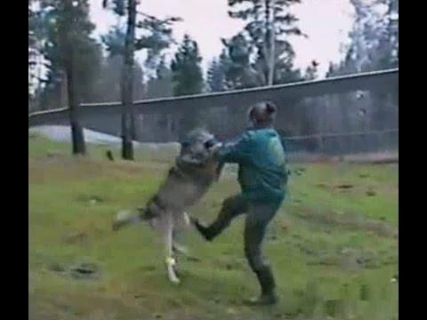 オオカミのしつけ方01