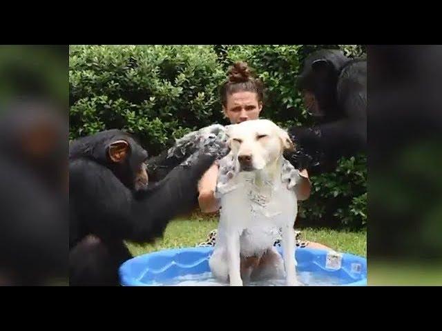 みんなで仲良く!ワンちゃんを洗いまくる動画・・・