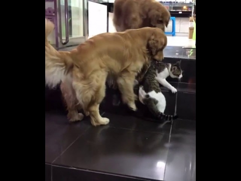 ネコの喧嘩01