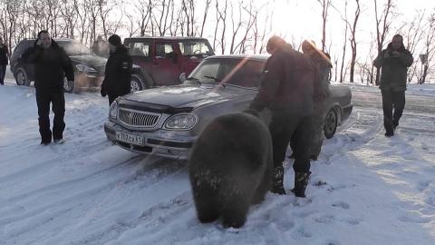 熊を放し飼い01