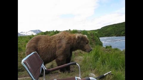 野生の熊_01