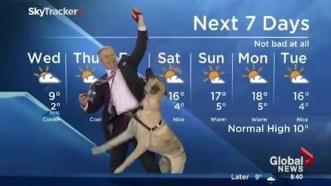 犬と一緒に放送する天気予報01