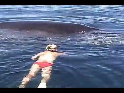 漁網に絡まったザトウクジラ01