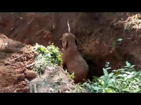 小象を救助_01
