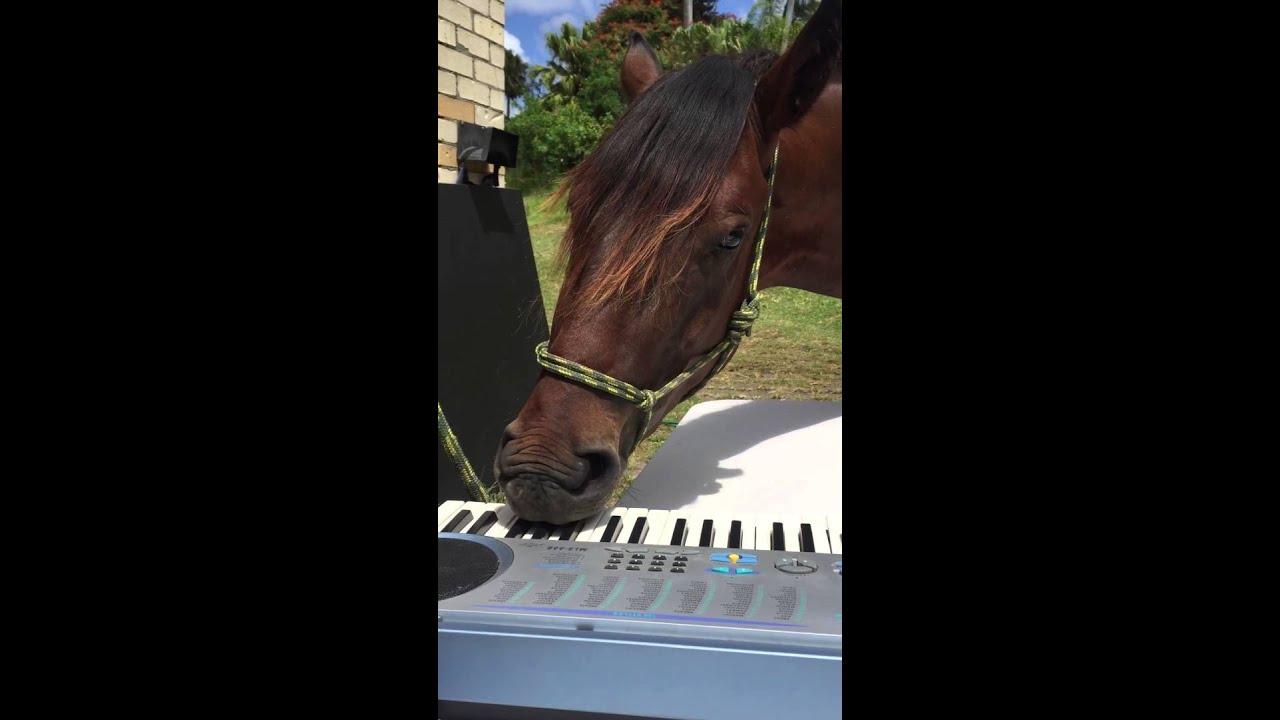ピアノを演奏する馬が!なんだか癒やされる!!