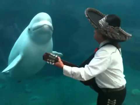 演奏を楽しむ白イルカ_01