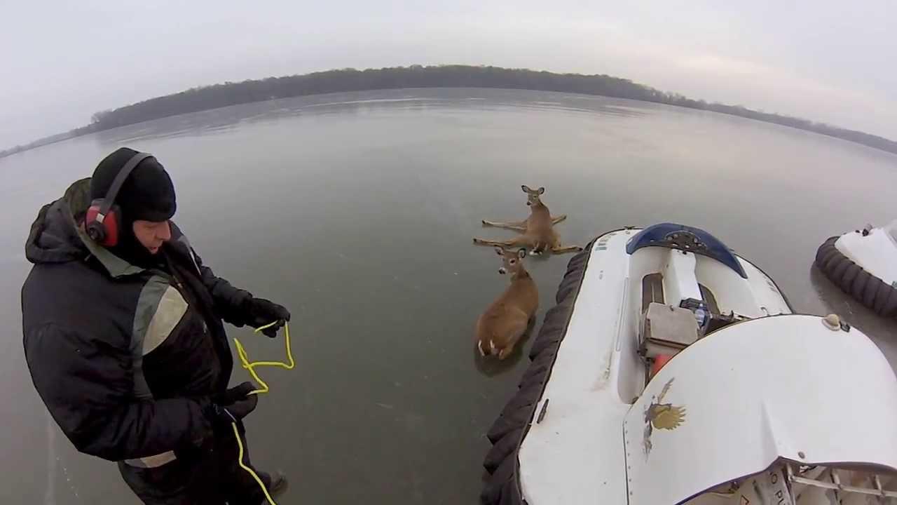 湖がツルツルに凍りすぎて、シカの親子が立上がれず脱出不能に!!