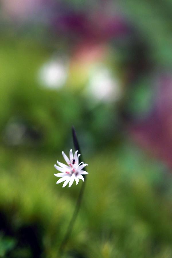 小さな花06