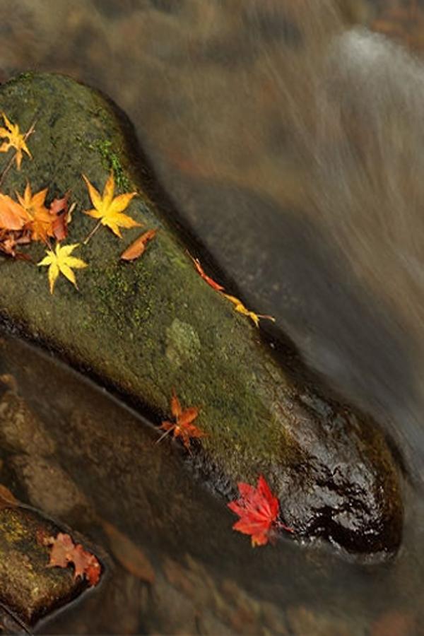 渓流の秋02