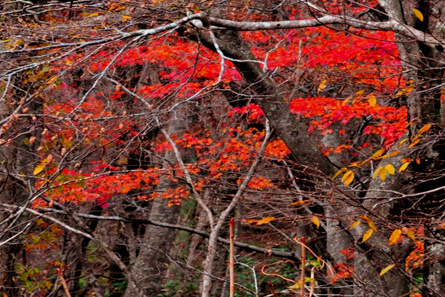 渓流の秋04