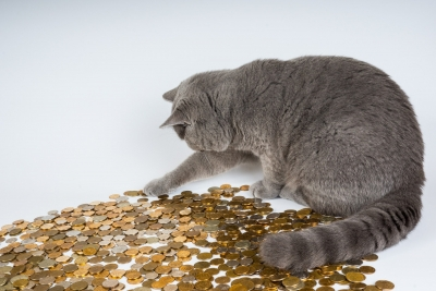 cat-money.jpg