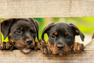 dow-dog-2019-20200104.jpg