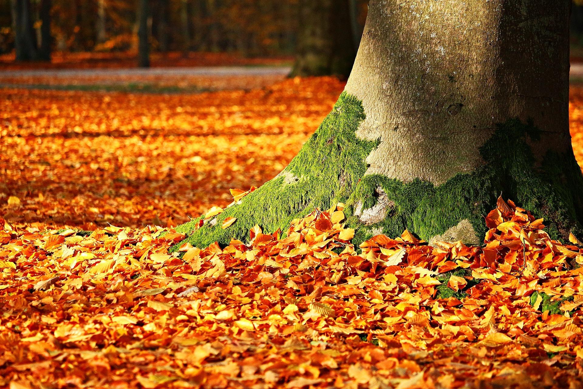 fall-foliage-1913485_1920.jpg