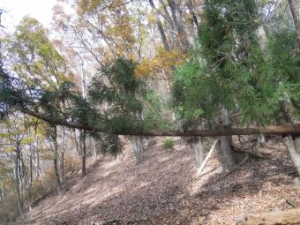 倒木も多いい191206