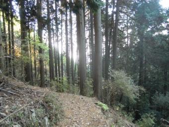 蓑毛分岐から大山下社への道191208