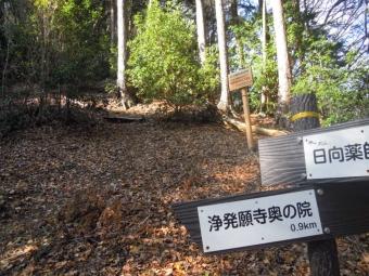 梅の木尾根分岐191218